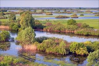 belarus_swamps2.jpg